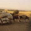 Tarım, Bingöl, 1978
