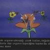 Bitkilerde Çiçek
