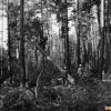 Ormanda ağaç kesimi