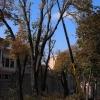 Ağaçların budanması
