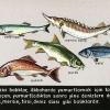 Deniz ve Tatlı Su Ürünleri