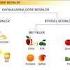 Sindirim Sistemi ve Beslenme