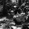 Ağacın işlenmesi, 1953