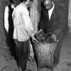 1952 yılında çay'ın İşlenmesi