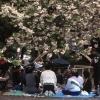 Japonya'da Geleneksel Bahar Kutlaması