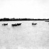 Seyhan Nehri, Adana, 1952