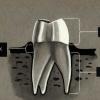 Dişlerin Yapısı