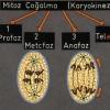 Hücrenin Yapısı