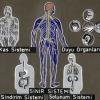 Sinir Sistemi