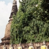 Tapınak, Bangkok,Tayland