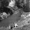 Bitlis, 1954