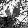 Kaşıkçı Yavruları, 1953