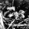 Balıkçıl Yumurtaları, 1953