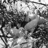 Kaçıkçı Kuşu, 1953