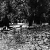 Balıkesir, Kuş Cenneti, 1953