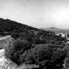 Ayvalık, 1979