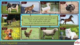 Çevremizdeki hayvanları tanır.