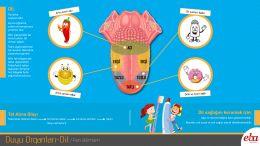Duyu organlarımızdan olan dilin yapısı ve çalışma prensiplerinin anlatıldığı video çalışması