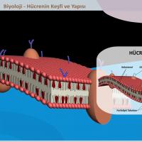 Hücrenin Keşfi ve Yapısı - 3