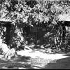 Hakkari, 1954