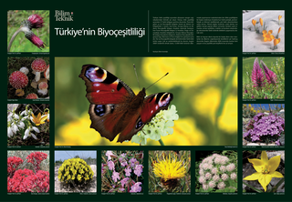 Biyoçeşitlilik Posteri