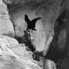 Urfa, Birecik, Kelaynak Kuşları, 1975