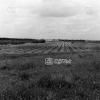 Urfa, Devlet Üretme Çiftliği, 1975