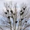 Erzurum, Kuşlar, 2006