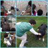 Güzeltepe İlkokulu 4/A  sınıfı hayvan barınaklarını ziyaret ediyor