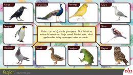 Yakınında bulunan kuşların barınma ve yiyecek alışkanlıklarını gözlemler, yakınında bulunmayan hayvanları araştırmaya karşı ilgi duyar. Doğayı ve hayvanları korumaya özen gösterir.