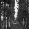 Bitlis, Belediye Parkı, 1954