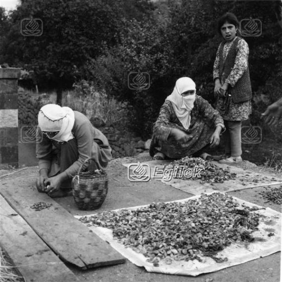 Bitlis, Kayısı Kurutması, 1974
