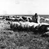 Diyarbakır, Sürü ve Çoban, 1974