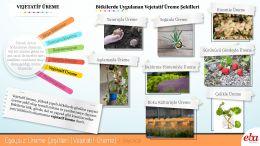 Eşeysiz üreme çeşitlerinden vejetatif üreme özellikleri ve örnekleri anlatılmaktadır.
