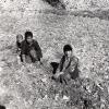 Erzurum'da Tarım, 1976