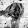 Erzurum, Çoban Köpeği, 1980