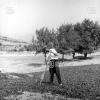 Kahramanmaraş Biberi, 1973