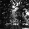 Yaşlı ağaçların kesilip, işlenmesi
