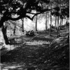 Giresun, Kale Parkı, 1975