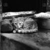 Giresun, Kedi, 1975