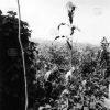 Giresun, Sebze Bahçesi, 1975