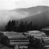 Giresun, Orman İşletmeciliği, 1975