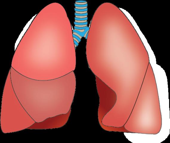 akciğer 25 ağustos 2015 g 246 rsel eğitim bilişim ağı