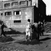 Fındığın harmanlanması, 1952