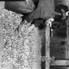 Kayseri, Sucuk İmalatı, 1971