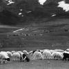 Kayseri, Tekir Yaylası, 1972