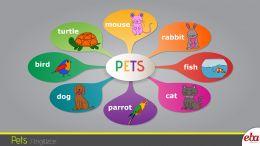 Bu infografikte pets-evcil hayvanlar konusu ele alınmıştır.