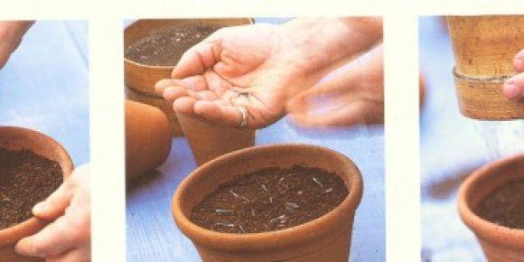 Saksıda tohum ekiyoruz