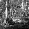 Tunceli, Huş Ağaçları, 1978