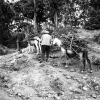 Tunceli, Dağ Odunu Taşıyan Oduncular, 1978